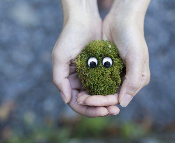 Ecológico, un estilo de vida más sano y concienciado
