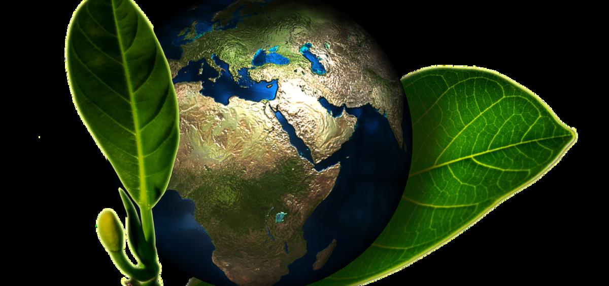 En qué consiste el Día Mundial del Medio Ambiente