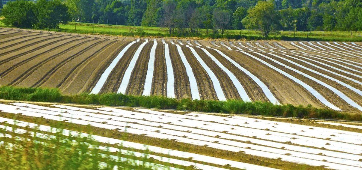 España es el primer productor de cultivo ecológico de la UE