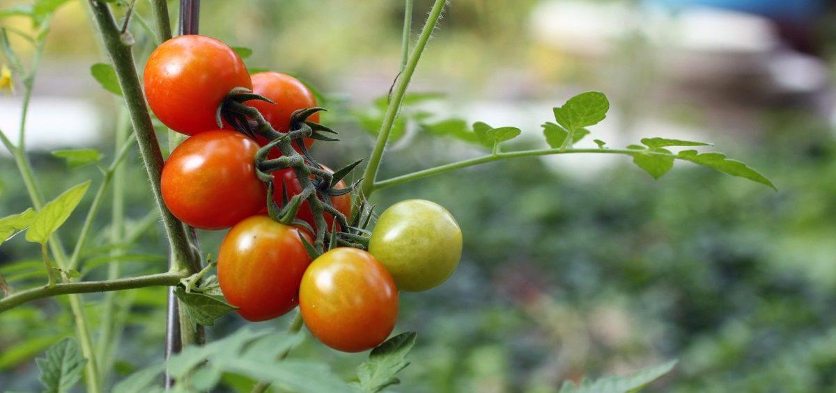 Qué son alimentos sostenibles