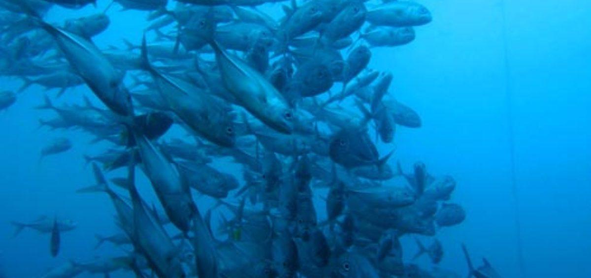 Qué es el pescado ecológico