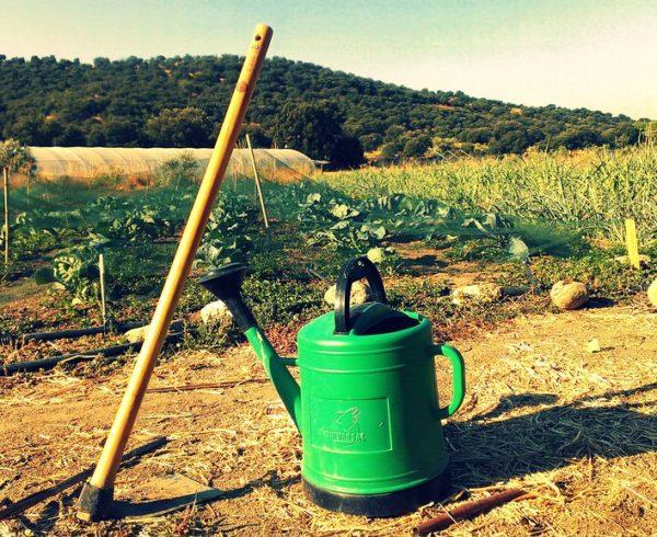Consejos para diseñar un huerto ecológico